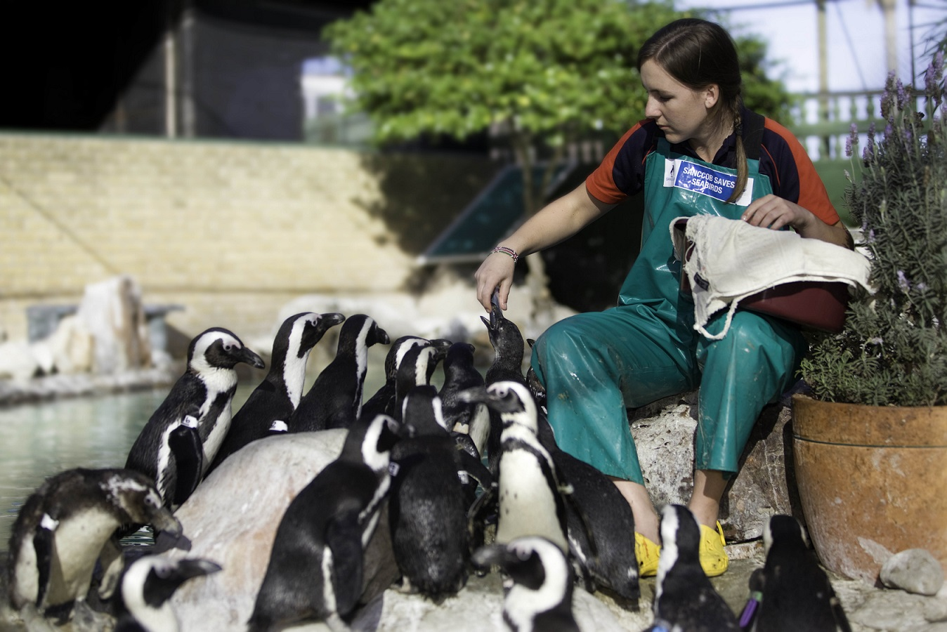 20 Years Ago AFRICAN PENGUIN RESCUE OPERATION 14