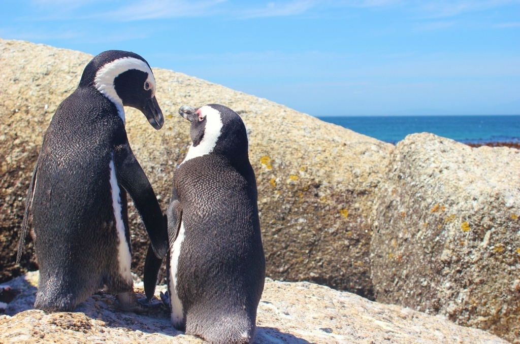 20 Years Ago AFRICAN PENGUIN RESCUE OPERATION 22